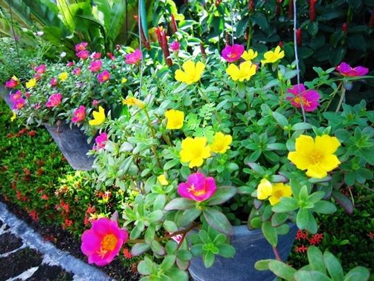 Nên chọn 10 loài hoa phù hợp nhất để trồng ở ban công nhà bạn 1
