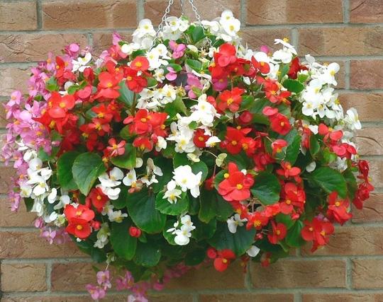 Nên chọn 10 loài hoa phù hợp nhất để trồng ở ban công nhà bạn 2