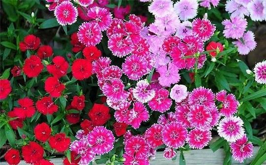 Nên chọn 10 loài hoa phù hợp nhất để trồng ở ban công nhà bạn 6