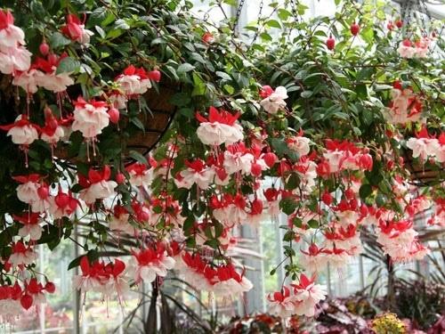 Nên chọn 10 loài hoa phù hợp nhất để trồng ở ban công nhà bạn 8
