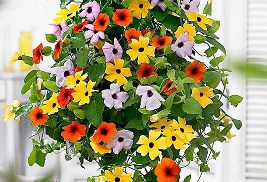 Nên chọn 10 loài hoa phù hợp nhất để trồng ở ban công nhà bạn 9