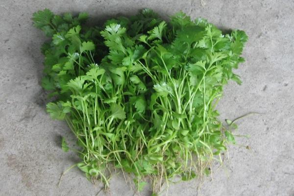 Những tác dụng tuyệt vời của 10 loại cây gia vị bạn nên trồng trong nhà 5