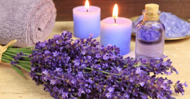 Top 10 công dụng tuyệt vời của tinh dầu oải hương về sức khỏe làm đẹp 1