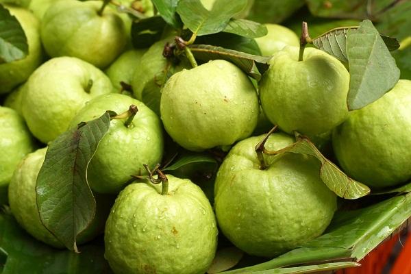 Top 10 loại trái cây giúp bạn da khỏe dáng đẹp lý tưởng 5