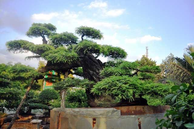 Top 10 thế uốn cây cảnh, bonsai được ưa chuộng nhất hiện nay 1