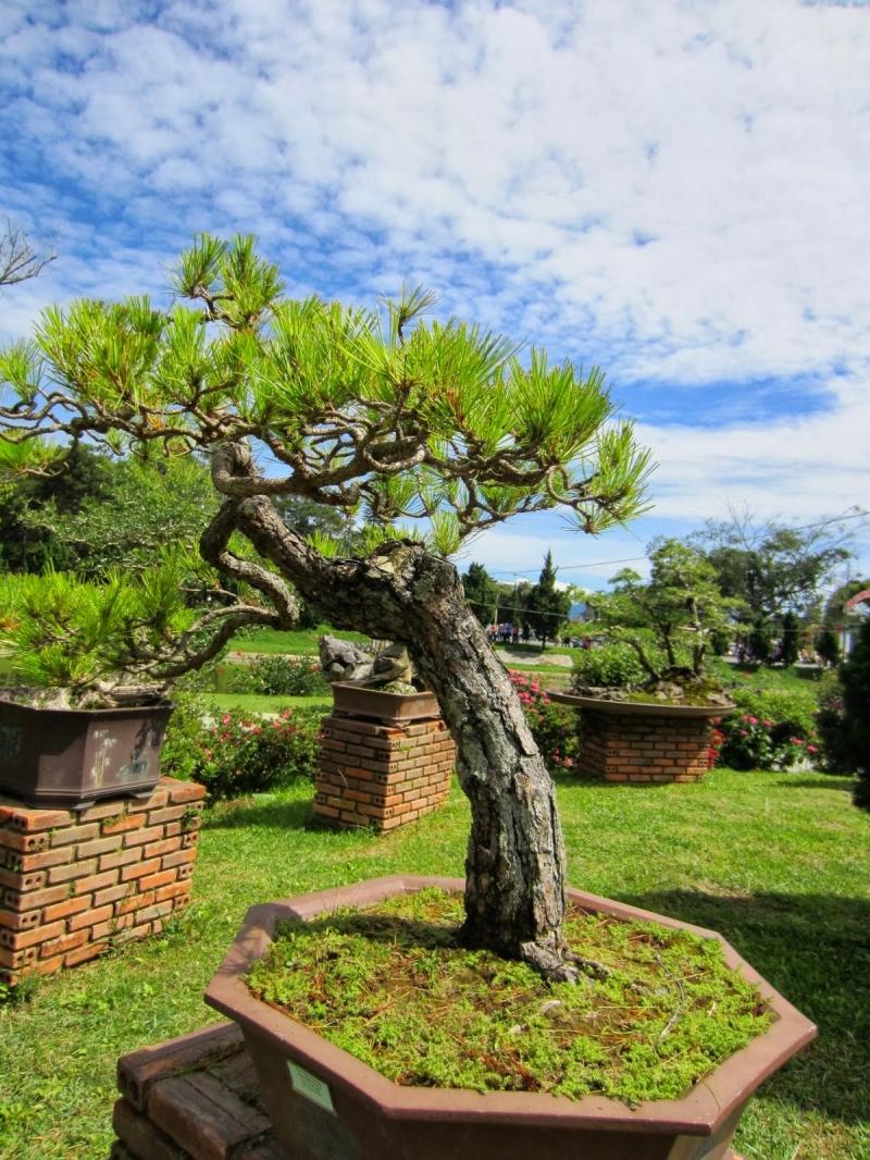 Top 10 thế uốn cây cảnh, bonsai được ưa chuộng nhất hiện nay 6