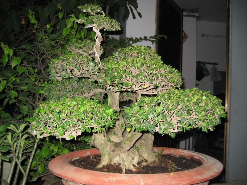 Top 10 thế uốn cây cảnh, bonsai được ưa chuộng nhất hiện nay 7