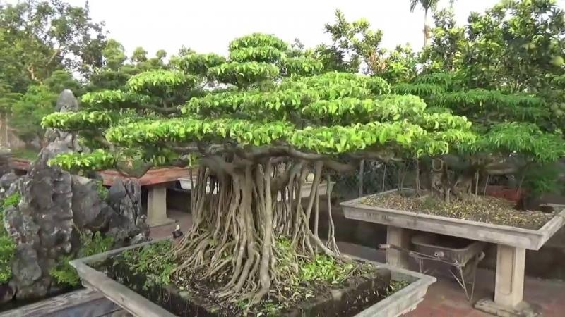 Top 10 thế uốn cây cảnh, bonsai được ưa chuộng nhất hiện nay 10