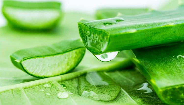 10 bí quyết thần thánh chữa rạn da bằng nguyên liệu thiên nhiên hiệu quả nhất 7