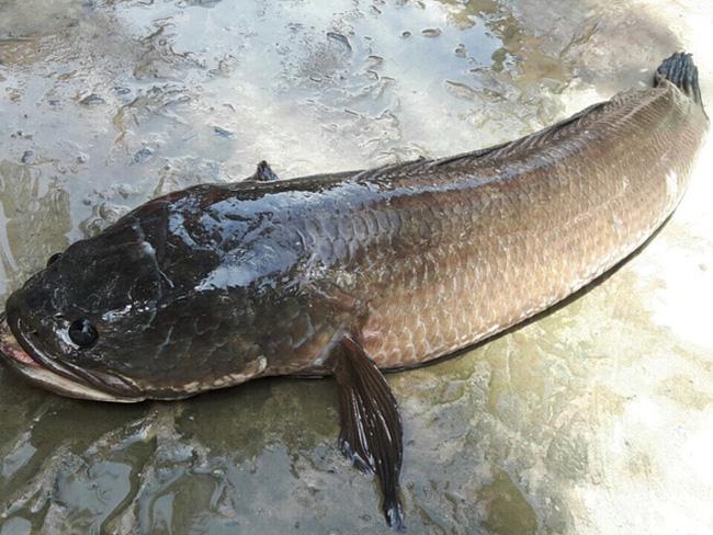 Tổng hợp 10 loài cá ngon nhất Việt Nam mà ai ăn cũng mê