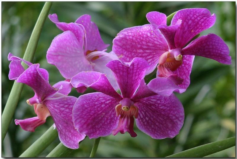 Danh sách 10 giống hoa lan đẹp nhưng dễ trồng và chăm sóc nhất hiện nay 10