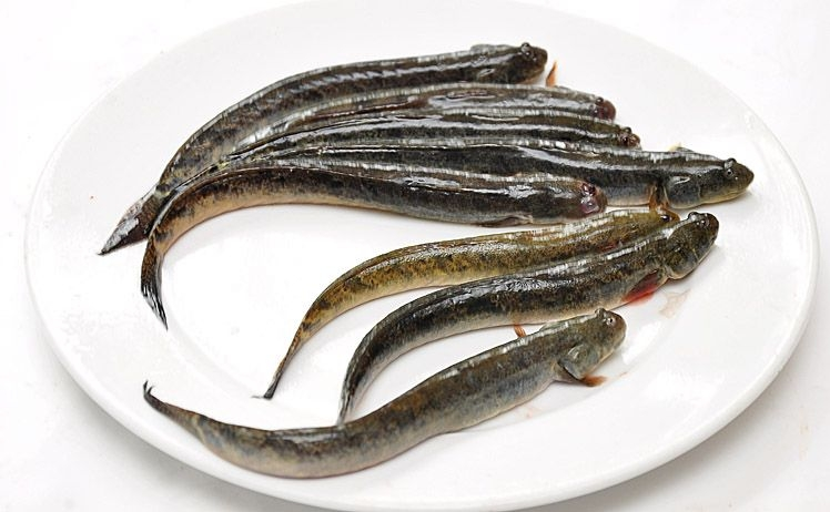 Tổng hợp 10 loài cá ngon nhất Việt Nam mà ai ăn cũng mê 2