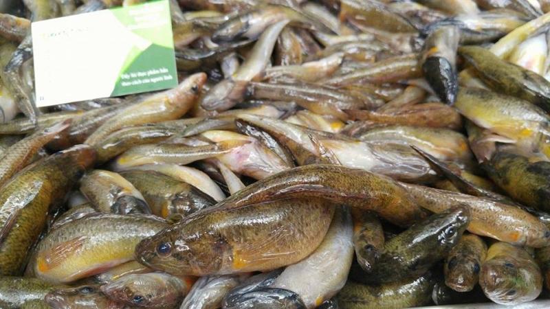 Tổng hợp 10 loài cá ngon nhất Việt Nam mà ai ăn cũng mê 3