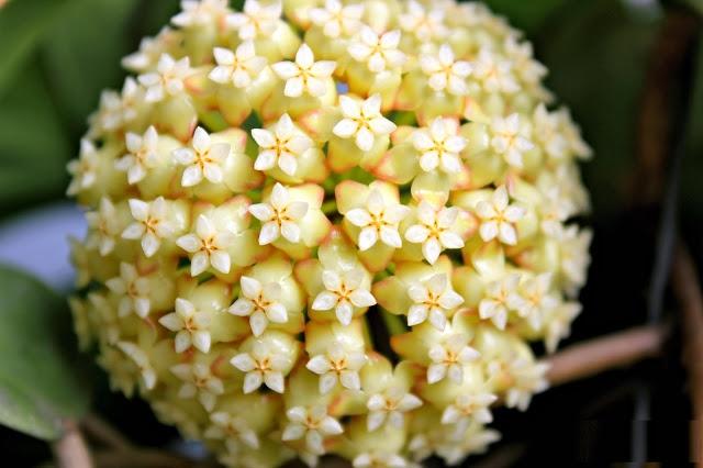 Danh sách 10 giống hoa lan đẹp nhưng dễ trồng và chăm sóc nhất hiện nay 4