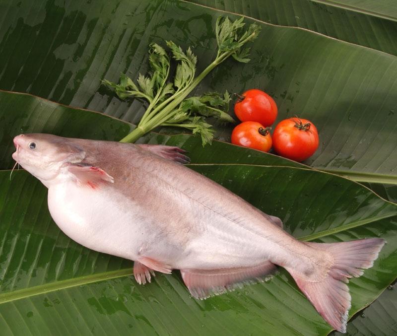 Tổng hợp 10 loài cá ngon nhất Việt Nam mà ai ăn cũng mê 8