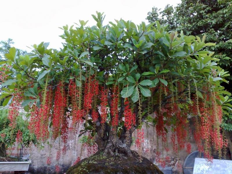 Rước tài đón lộc, tiền tài như nước nếu bạn trồng 10 loại cây này trong nhà 1