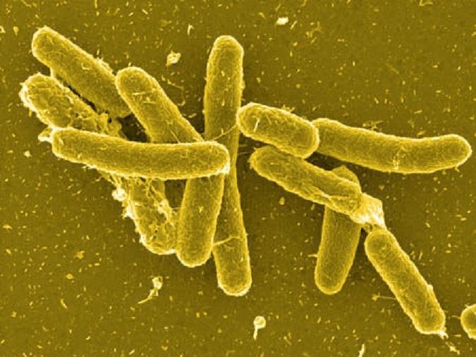 Top 10 căn bệnh gây ra tiêu chảy thường gặp nhất và cách phòng tránh