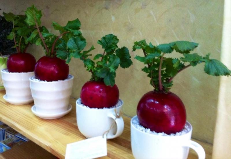 Rước tài đón lộc, tiền tài như nước nếu bạn trồng 10 loại cây này trong nhà 9