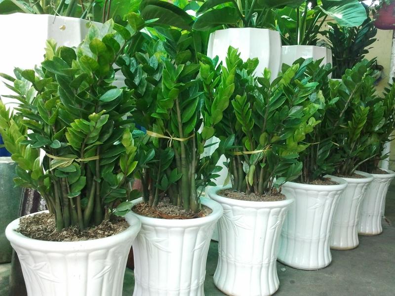 Rước tài đón lộc, tiền tài như nước nếu bạn trồng 10 loại cây này trong nhà 2