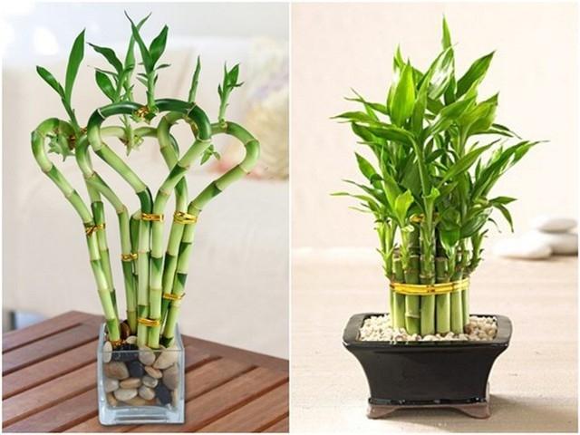 Rước tài đón lộc, tiền tài như nước nếu bạn trồng 10 loại cây này trong nhà 3