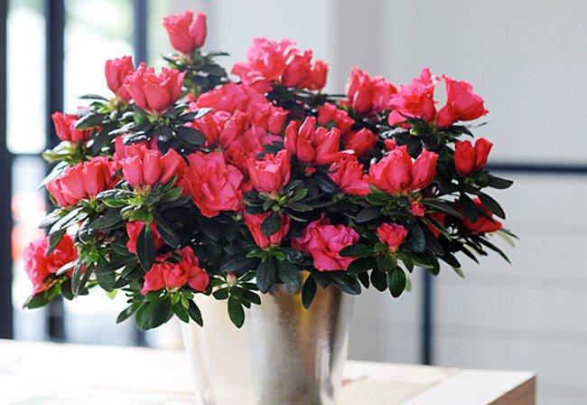 Rước tài đón lộc, tiền tài như nước nếu bạn trồng 10 loại cây này trong nhà 7