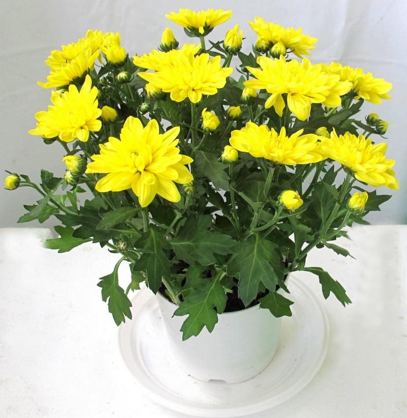 Rước tài đón lộc, tiền tài như nước nếu bạn trồng 10 loại cây này trong nhà 8