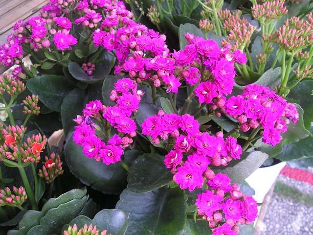 Muốn lọc sạch không khí xung quanh bạn nên trồng 10 loại cây cảnh này trong nhà 10