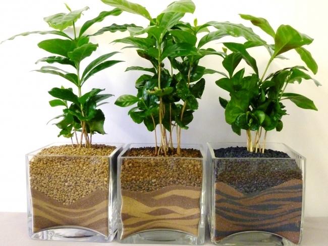 Muốn lọc sạch không khí xung quanh bạn nên trồng 10 loại cây cảnh này trong nhà 2