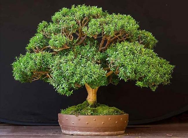Muốn lọc sạch không khí xung quanh bạn nên trồng 10 loại cây cảnh này trong nhà 3