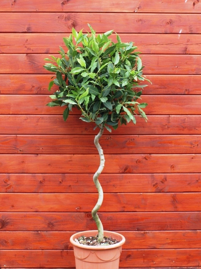 Muốn lọc sạch không khí xung quanh bạn nên trồng 10 loại cây cảnh này trong nhà 4
