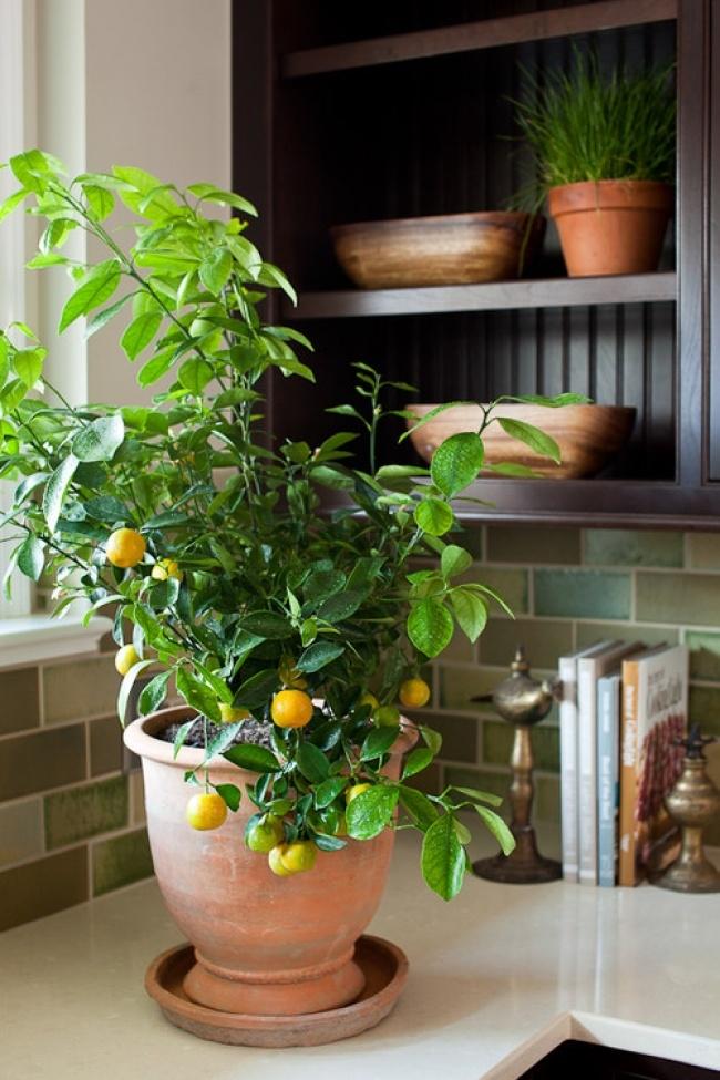 Muốn lọc sạch không khí xung quanh bạn nên trồng 10 loại cây cảnh này trong nhà 5