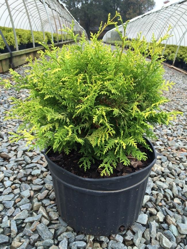 Muốn lọc sạch không khí xung quanh bạn nên trồng 10 loại cây cảnh này trong nhà 6