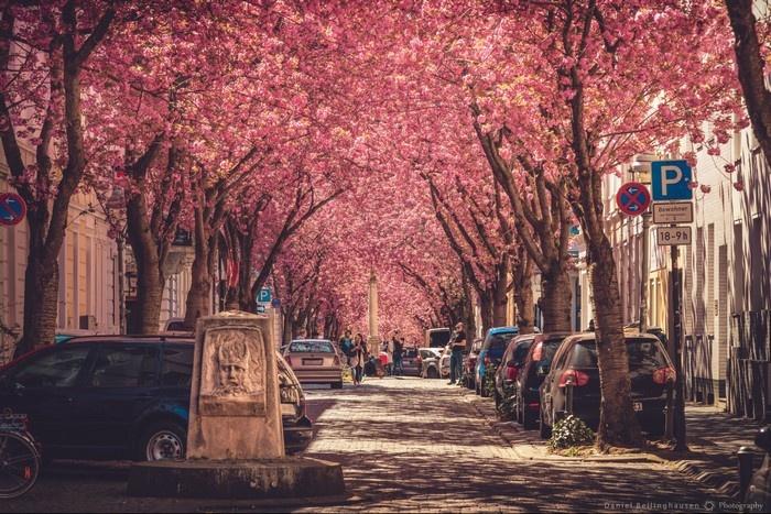 Đừng bỏ qua 10 con đường đẹp nhất thế giới làm say đắm lòng người 6