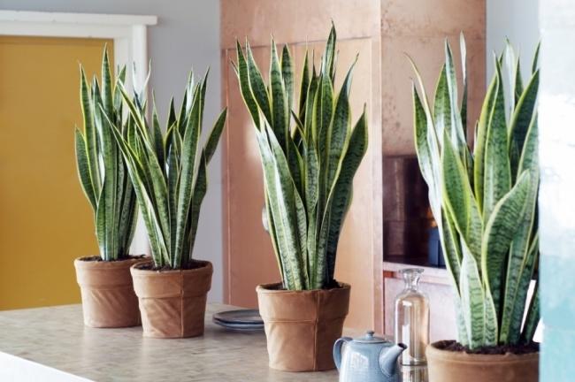 Muốn lọc sạch không khí xung quanh bạn nên trồng 10 loại cây cảnh này trong nhà 7