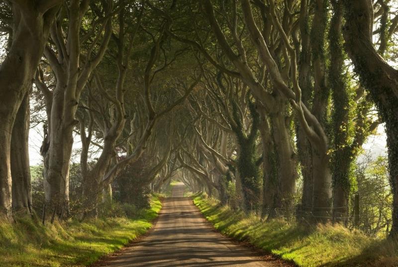 Đừng bỏ qua 10 con đường đẹp nhất thế giới làm say đắm lòng người 7