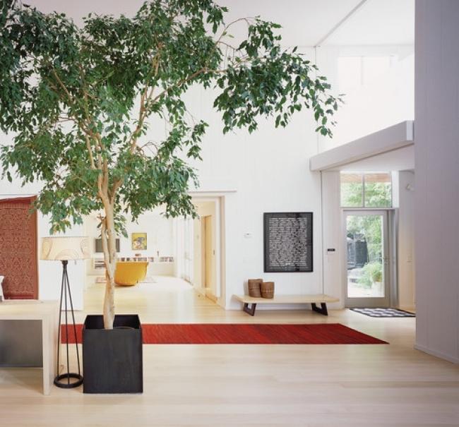 Muốn lọc sạch không khí xung quanh bạn nên trồng 10 loại cây cảnh này trong nhà 8