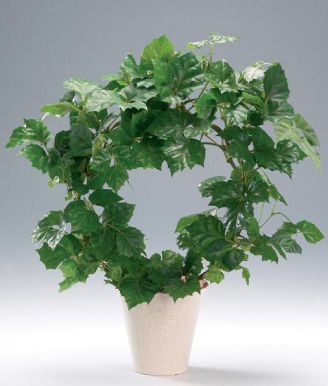 Muốn lọc sạch không khí xung quanh bạn nên trồng 10 loại cây cảnh này trong nhà 9
